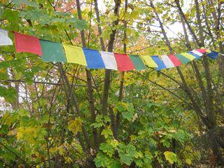 Tibetan prayer flags deciduous